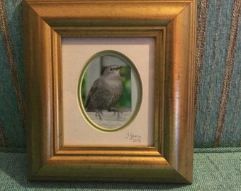 Photo of a young starling in a frame approx 20cm by 22cm