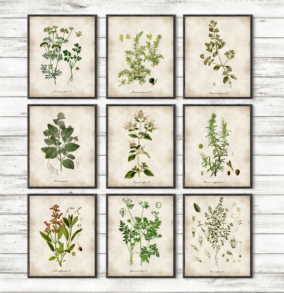 Herb Kitchen Wall Decor