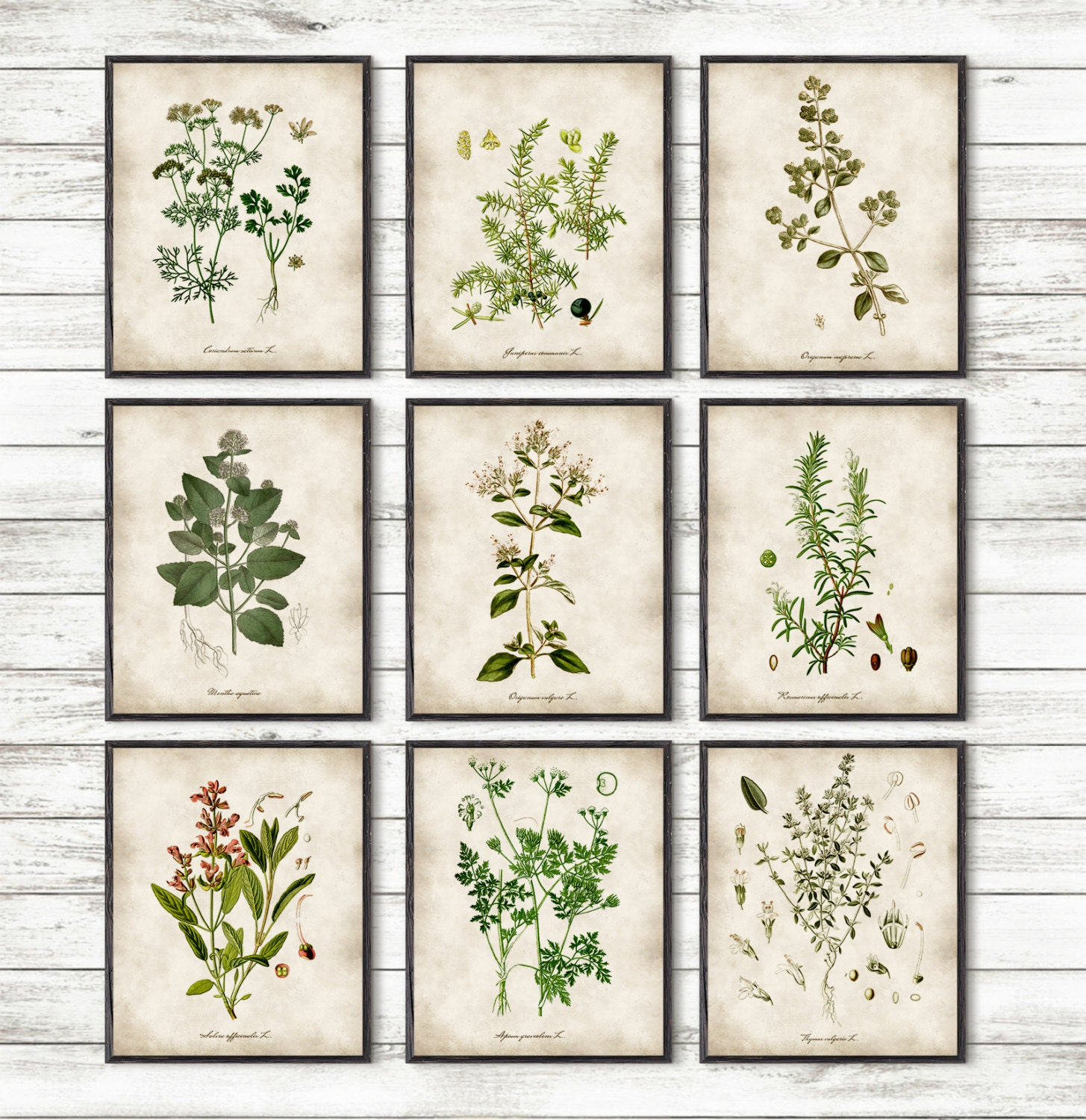 Kitchen herbs kitchen wall art print set of 9 by davesoffice for Art prints for kitchen wall