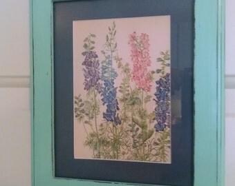 Larkspur, delphinium, vintage prints, botanical prints, antique prints, pictures, flower pictures, flower prints, botanical, flower, vintage