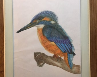 King Fisher water color painting