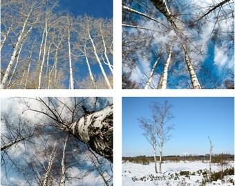 Spring - Spring Sky - Blue Sky - Spring Photo - Blue Sky Photo - Blue and White - Blue - Set of 4 Photos - Digital Photo - Digital Download