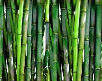 Bamboo and Teak Fragrance Oil 10ml, Home Fragrance Oil, Candle, Soap, Potpourri Oil