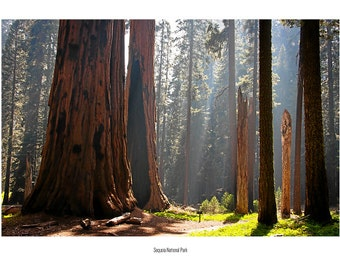 Postcard_066 - Sequoia National Park, California (USA)