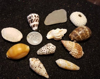 Hawaiian sea shell lot with sea glass