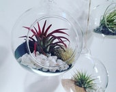 Black sand air plant Tillandsia terrarium kit in hanging glass globe~ perfect Mother's Day wedding centrepiece diy gift