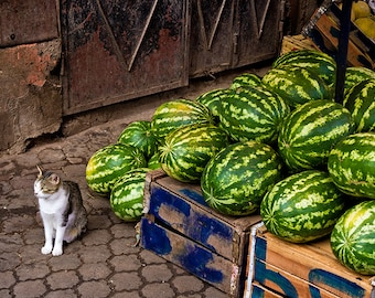 Cat and Watermelons - Fine Art Photography, Large Travel Wall Art prints, Wall Decor, Street Decor and Old City