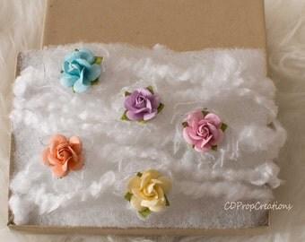 Spring rose pk
