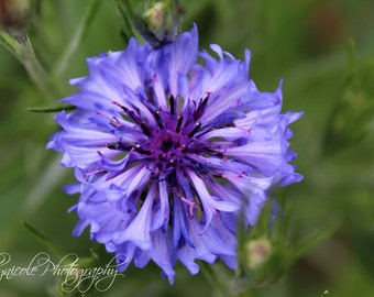 Flower Photography, Purple Flower, Spring Photography, up-close flower, Nature Photography