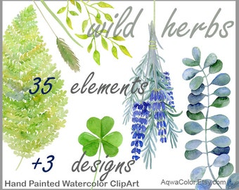 Watercolor clipart Wild Herbs - commercial use clipart grass herb clipart lavender clipart nettle fern wild flower leaf bunch herb png set