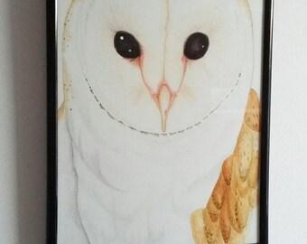 Tawny owl - A4 illustration.