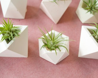 Pentagon Geometric Planter with Airplant
