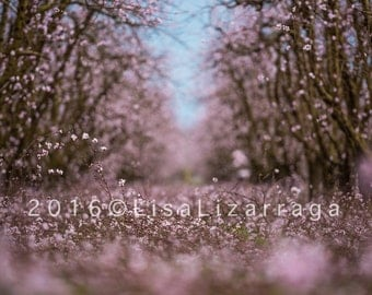 Spring Orchard #7423