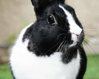 Dutch Rabbit Cross Stitch Kit