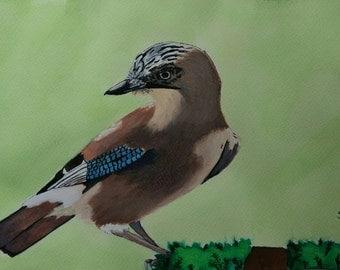 Eurasian Jay (original painting)