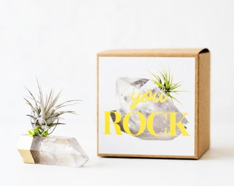 Thank You Gift, Best Friend Birthday, Coworker Gift, Unique Gifts, Boss Appreciation Gift, Hostess Gifts, Gold Dipped Crystal Air Plant