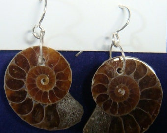 Mesozoic Era Fossil Ammonite and Sterling Silver Earrings #5