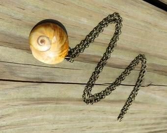 Seashell Necklace // Brass Shell Necklace // Simple Beach Jewelry // Shark's Eye Shell