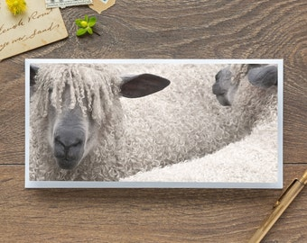 Wensleydales - Single Blank Card / Birthday / Thank You / Notelet / Sheep
