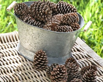 Lot of 10 / 20 / 30 / 40 Opened Pine Cones- Large Pine Cones - Rustic Decor - Natural  Pine Cones - Rustic Craft Supply -Large Cones
