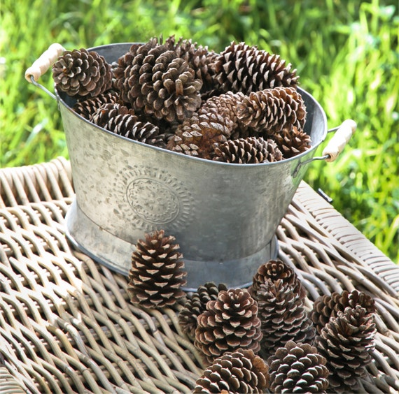 Lot of 10 20 30 40 opened pine cones large pine cones for Large pine cones