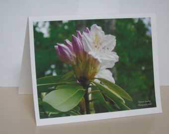 Floral Variety Pack Blank Note Cards #1