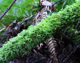Green Mossy Branch Nature Print