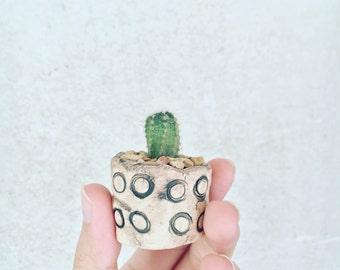 ceramic planter_mini cactus
