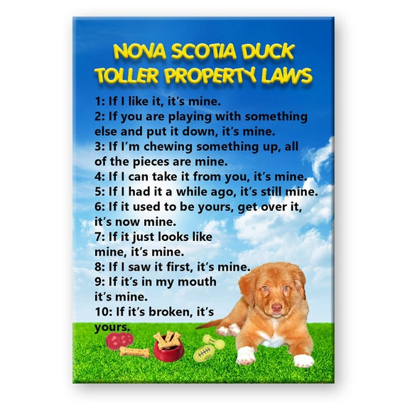 Nova Scotia Duck Tolling Retriever Property Laws Fridge Magnet