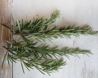 rosemary, dried (20 g / 0.7 oz or 50 g / 1.76 oz)