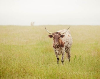 texas longhorn cow photography, rustic farmhouse home decor, farm animal, farm photography, country wall art, animal photography