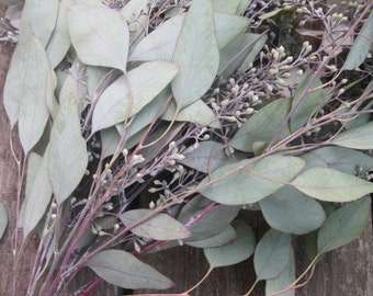 EUCALYPTUS Varieties  naturally DRiED FLOWER and leaf Bunches  SEEDED or Silver Dollar  Cupped Feather