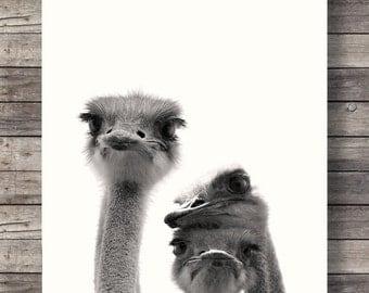 Ostriches art print   Cute Ostrich faces   Sepia Ostrich photo   Printable wall art   Safari decor   Jungle animals decor   African animals