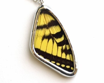 Tiger Swallowtail Butterfly Wing Necklace Real butterfly wing pendant