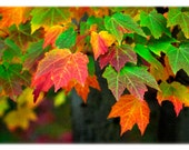 Autumn Leaves Photography - North Carolina Nature, Fall, Home Decor Fine Art Print or Note Card Set