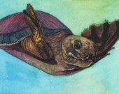 Pig-nosed turtle watercolor and pen and ink print, 8x10