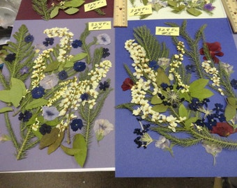 Choose your Real Pressed Flower Assortments Grown in Alaska 328 FL