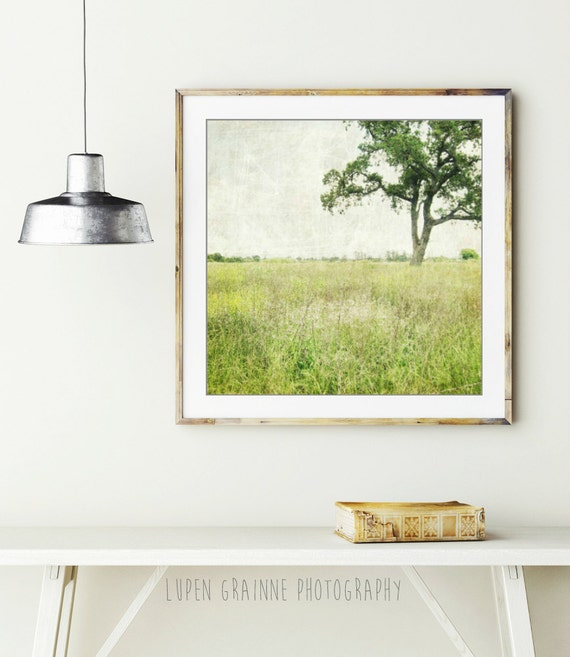 "Landscape photography green wall art oak tree in meadow minimal landscape rustic photograph 8x8 20x20  ""Stay a While"""