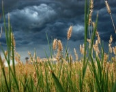 Heading Toward the Storm - landscape photograph - dark sky nature clouds art photo grass field plain stormy