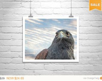 Sale 15% Hawk Art, Bird Print, Hawk Photograph, Bird Photography, Harris Hawk, Bird Art, Hawk Bird, Wildlife, Art Photography, MurrayBolesta
