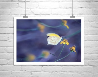 Butterfly Photography, Purple, Yellow, Butterfly Art, Nature Photography, Butterfly Print, Violet, Blue, Fine Art Photography, Insect Art