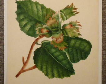 ORIGINAL BOTANICAL  GOUACHE Signed by artist Green leaves flowers brown seeds vintage rare app 9 1/2 in x 8in