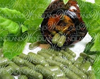 Gynura Procumbens Herbal Supplement
