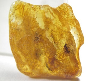 Fossil of an insect in the Baltic amber. EM712