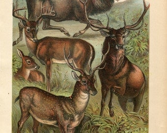 Antique Print of Moose, Deer, Elk Color Lithograph 1880s Johnson's Household Book of Nature