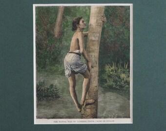 Antique Victorian Print - Climbing Cocoa Palms in Ceylon / Sri Lanka - Matted - Ready to Frame - Home Decor