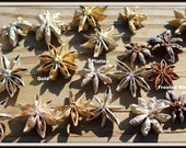 Star Anise bag 0f 19+-Painted Gold-Frosted white-Platina painted-dried botanicals-Floral decor
