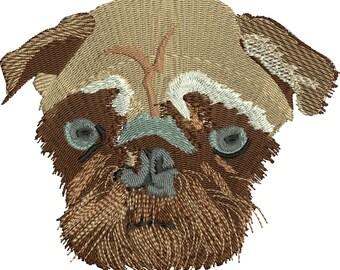 Pug Cute lovable dog