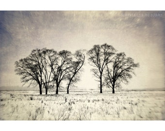 Winter Landscape Photography, Nature Photography, Michigan Art, Tree Photography, Traverse City, Michigan, Dreamy Photography, Landscape Art