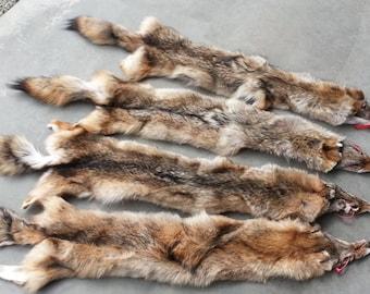 Eastern Coyote Fur Pelt- Soft Garment Tanned Stock No. ECYH